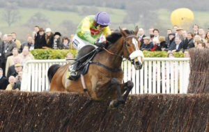 How many times did Kauto Star run in the Cheltenham Gold Cup?