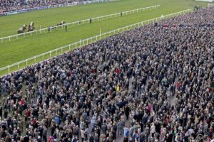 How many races at the Cheltenham Festival are handicaps?