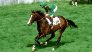 What was Shergar's race record?