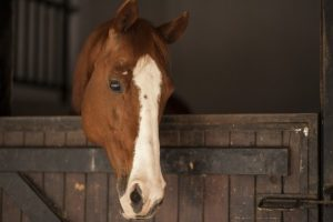 Which was the most prolific horse ever?