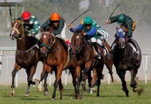How fast can racehorses run?