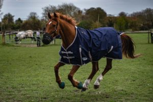 How can you tell one racehorse from another?