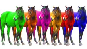 How many horses with colours in their names have won the Grand National?